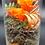 Thumbnail: Glas mit stabilisierter Rose