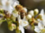 Jardin-des-abeilles-©PxHere.jpg