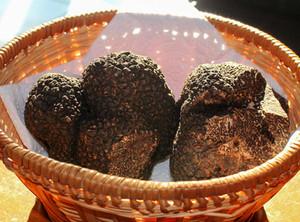 Marchés aux truffes en Périgord Ribéracois
