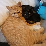 Firefox & Jupiter.jpg