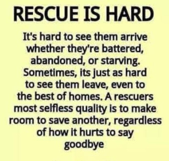 A Cat Watch Pledge to all our rescues  xx