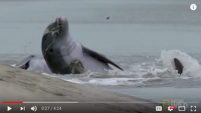 These Dolphins Have Learned A Unique Technique To Fish