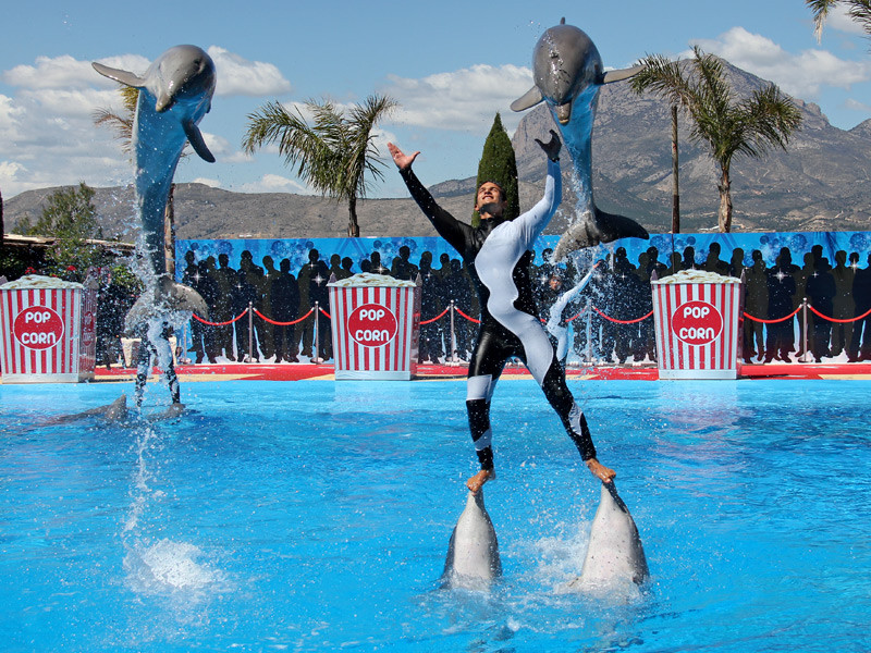 Fun things to do with children in Altea - Mundo Mar dolphin show