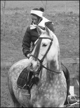 cheval andalou PRE, élevage chevaux