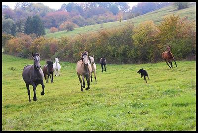 Elevage chevaux PRE, acheter cheval espagnol