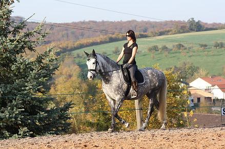 Elevage cheval andalou, acheter cheval espagnol PRE