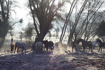 chevaux pure race espagnole à vendre