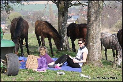 Elevage chevaux PRE, acheter cheval espagnol PRE