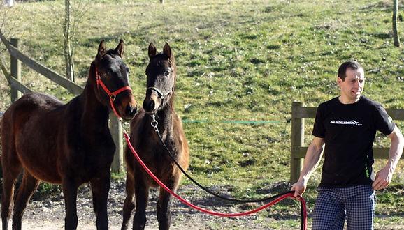 cheval pure race espagnol, cheval espagnol à vendre