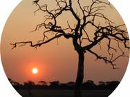 Namibia Silhouette    7-2002