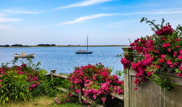 Bass River Roses