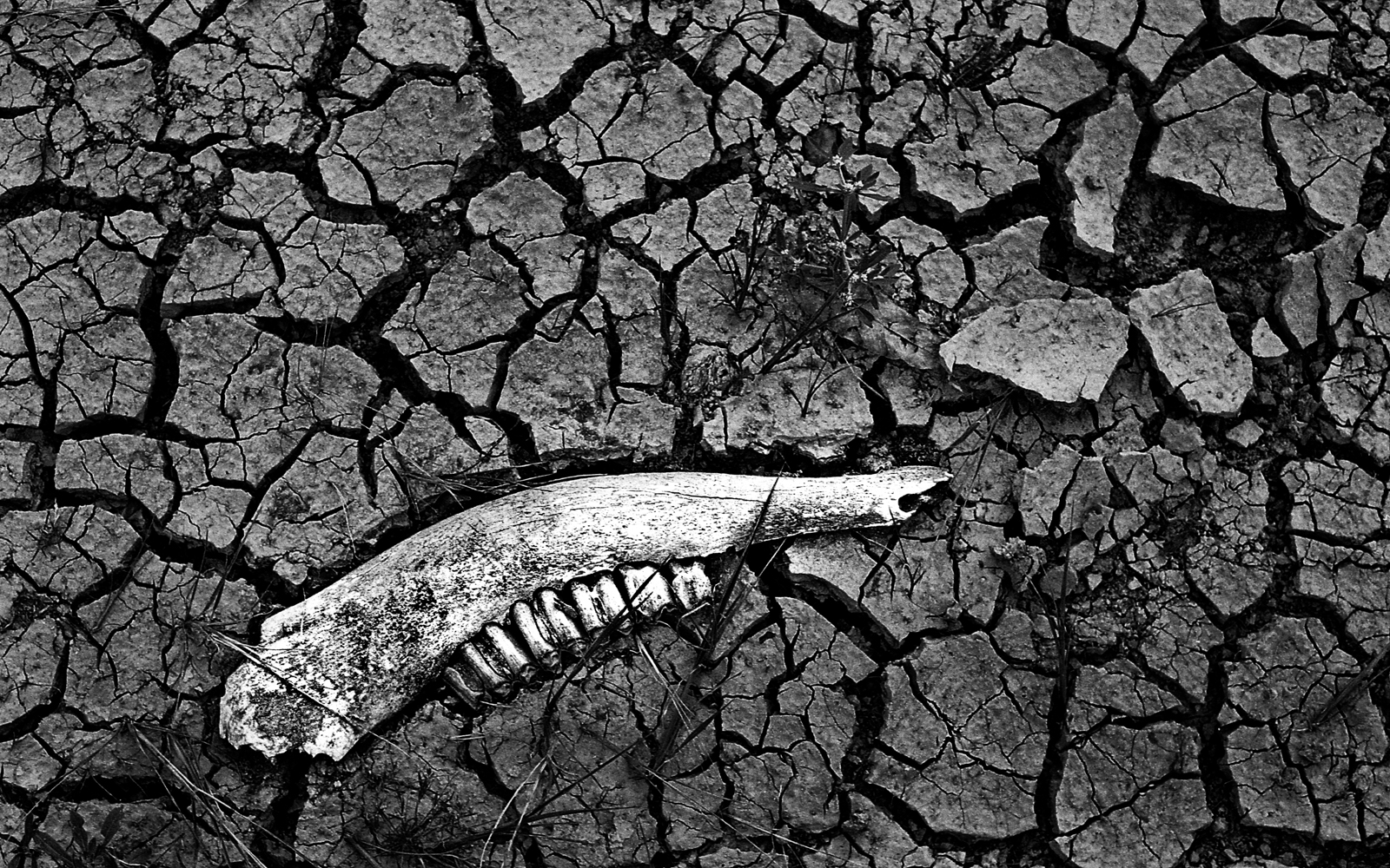 """""""Cuando las aguas"""" 08"""