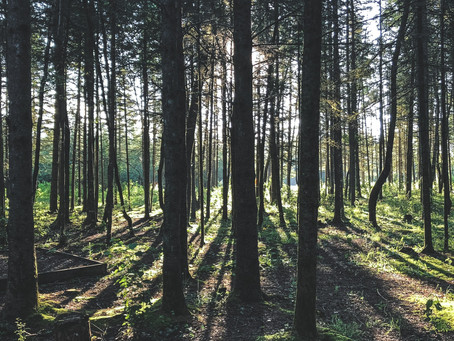 Harvest Deferral Carbon Credits – We Can Help!