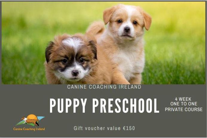 Voucher puppy.JPG