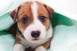 sad puppy.jpg