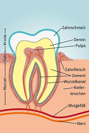 zahnarzt-leipzig-zap-xhelili-zahn-quersc