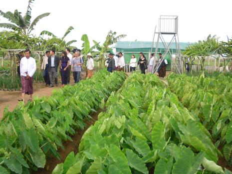 Agriculture Program in Myanmar