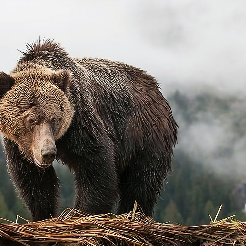 Coastal carnivore conservation in the Pacific Northwest