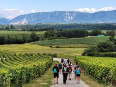 Passejada entre vinyes