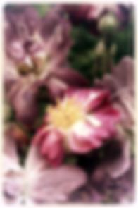 bloemen, roos, rozen, bloemenfoto, vibeke, viteri