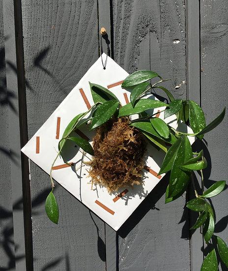 Square Confetti Plant Wall Mount