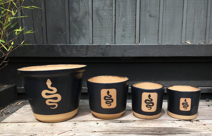 "3"", 4"", 6"" or 8 "" Snake Plant Pot"
