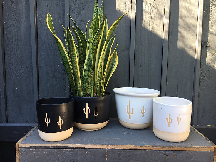 "3"", 4"", 6"" or 8"" Cactus Plant Pot"