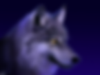 Wolf_moonshine_eyes.jpg 2013-9-8-14:43:2