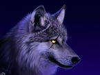 Wolf_moonshine_eyes.jpg 2013-9-8-14:43:2