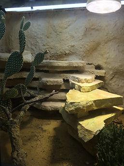 Leopardgecko Hatung, Leopardgecko Terrarium, leopardgecko-guru