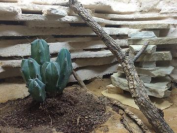 Leopardgecko Terrarium Einrichtung, natürliches Einrichten, Leopardgecko Terra, leopardgecko-guru