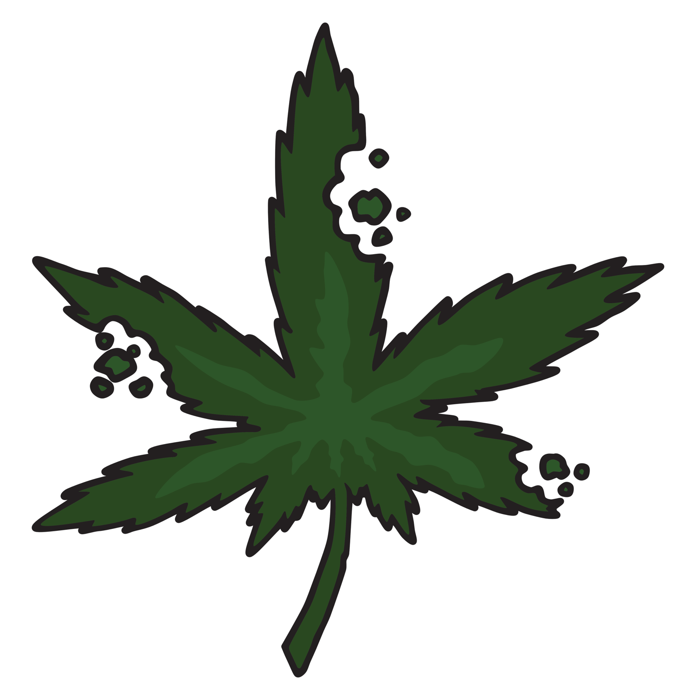Cannabis Caregiving Certification
