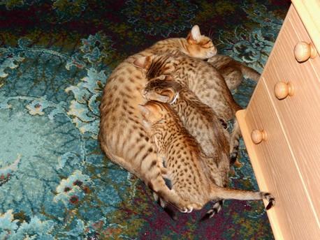 oriyah & kittens