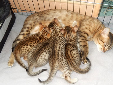 patrick_kittens.jpeg