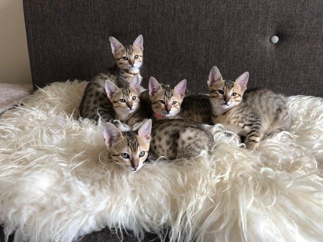 Lesley's kittens