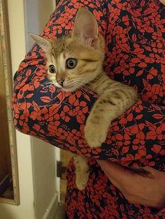 kitten18.JPG