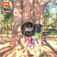360 Baobab.JPG