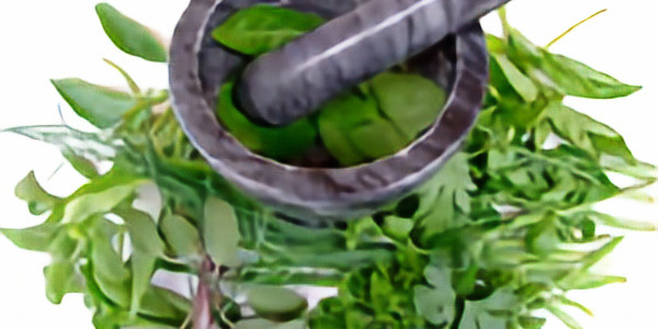 Baginton Gardeners - Growing and Using Herbs