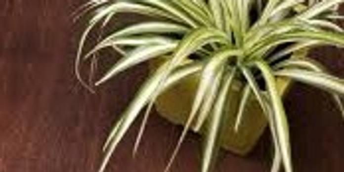 Baginton Gardeners -  Happy Healthy House Plants