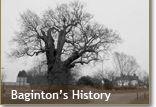 The Baginton Oak tree
