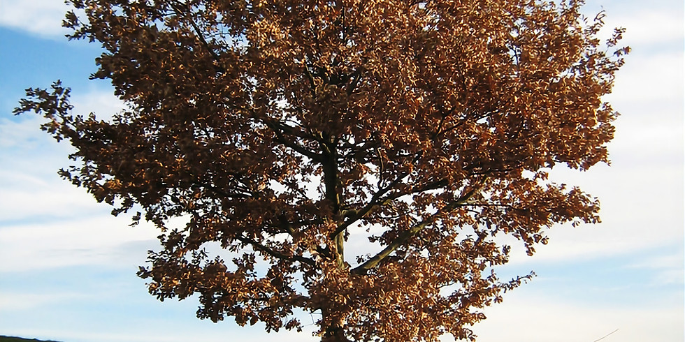 Baginton Gardeners - 50 Things You Didn't Know About Trees