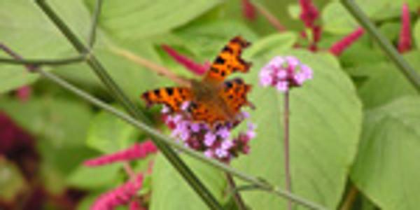 Baginton Gardeners - Gardening for Wildlife