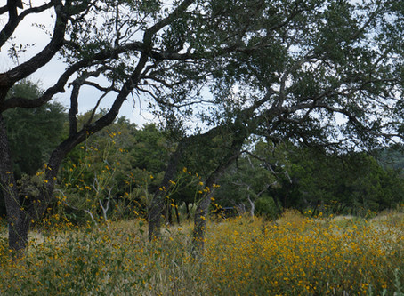 Hill Country Autumn