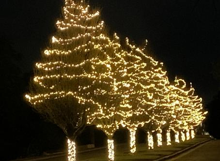 Christmas Lights-Barton Club Drive