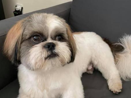 Alfie Fur Baby Pup