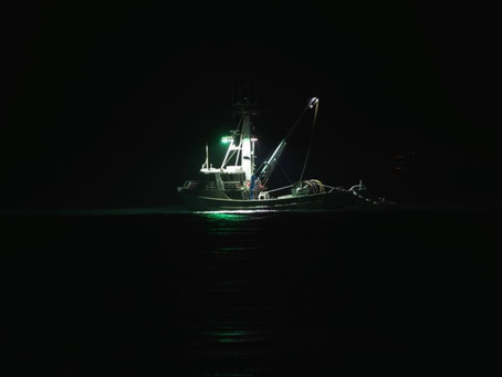 Squiding at Night