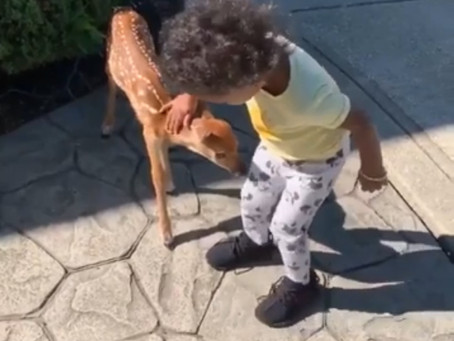 Fawn & Toddler Share Mutual Interest