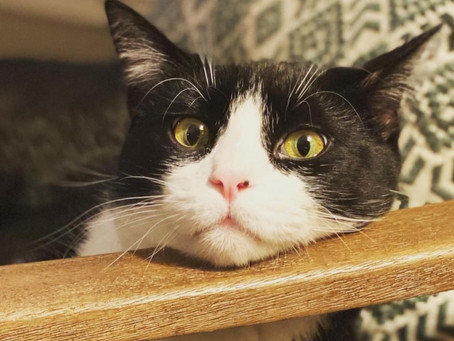 Kitty Bored in COVID Era