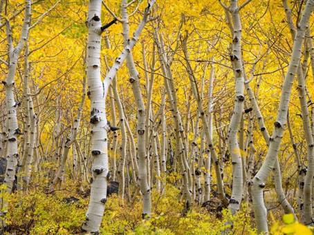 Eastern Sierra Nevada Autumn