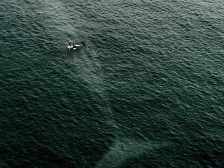 Stunning Image-Whale Under Small Boat